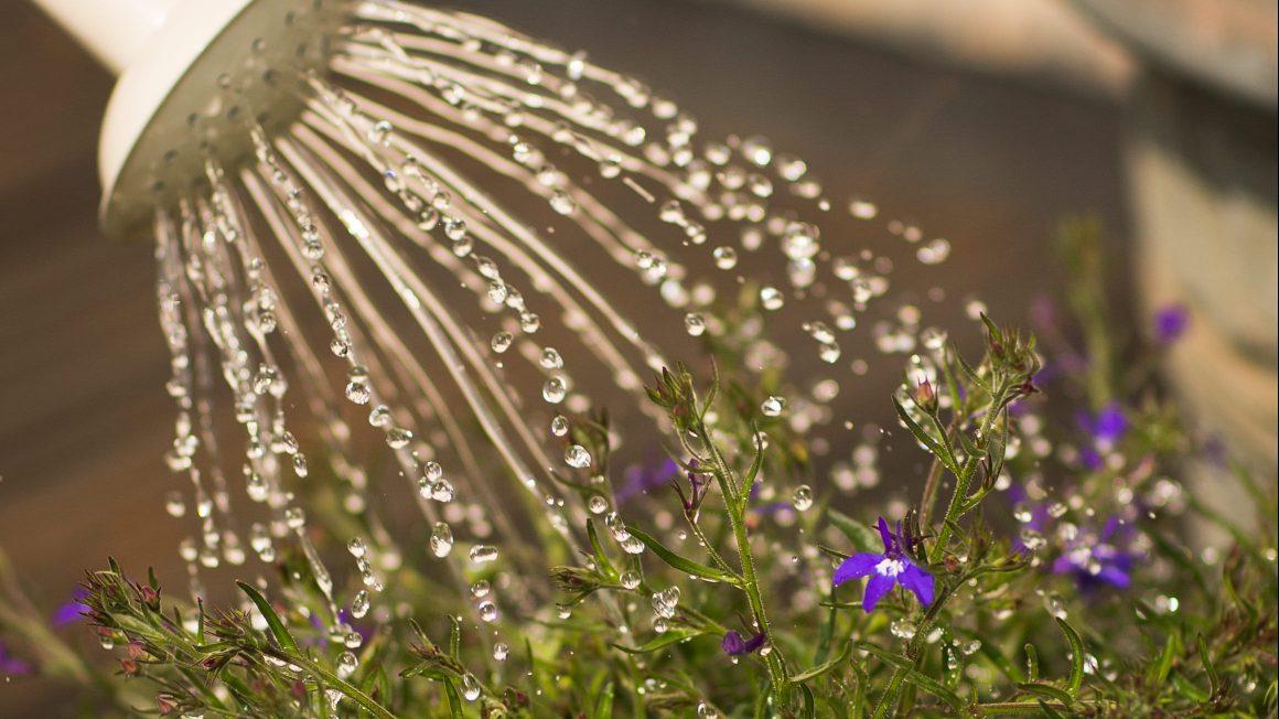 beautiful-bloom-blooming-347729