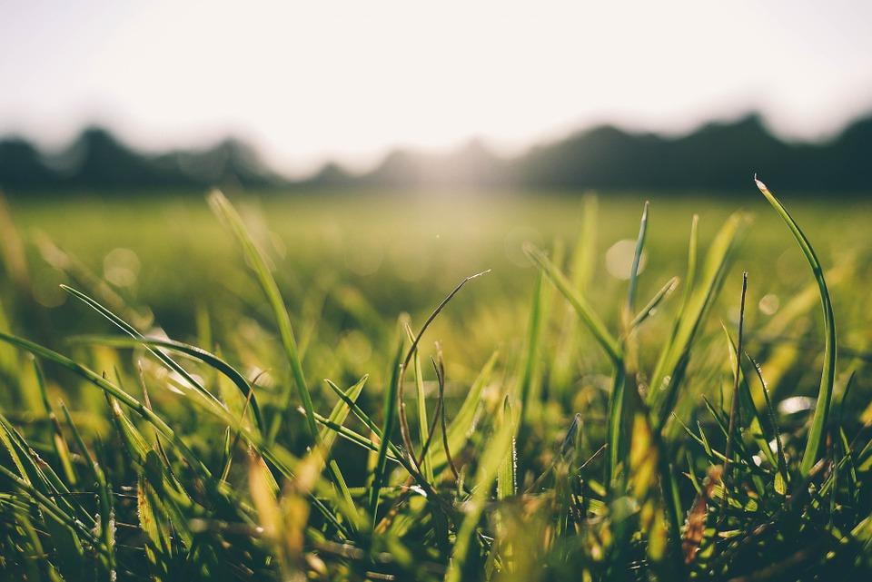 grass-916407_960_7201