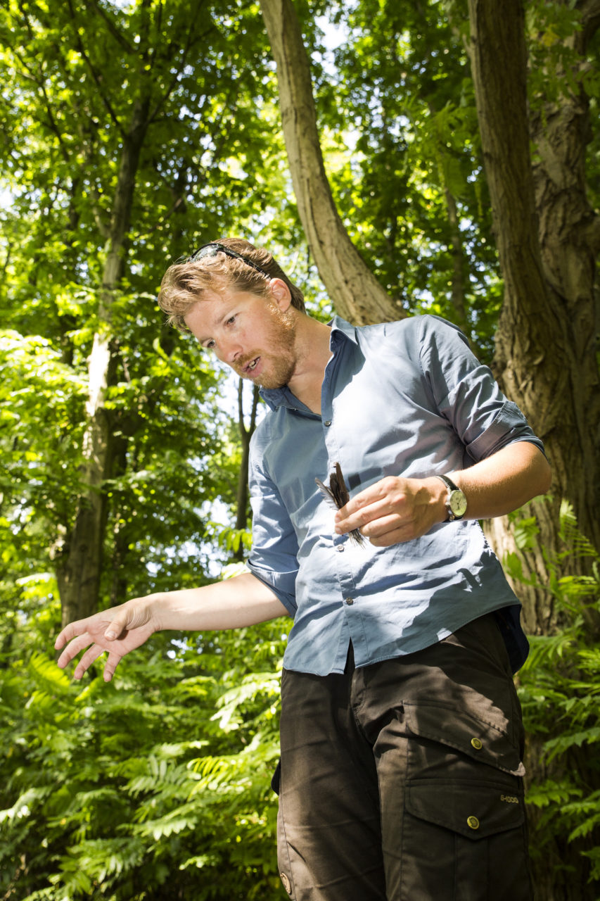 3-Roofvogelnesten-zoeken-dmv-het-opsporen-van-veertjes-van-dode-vogels