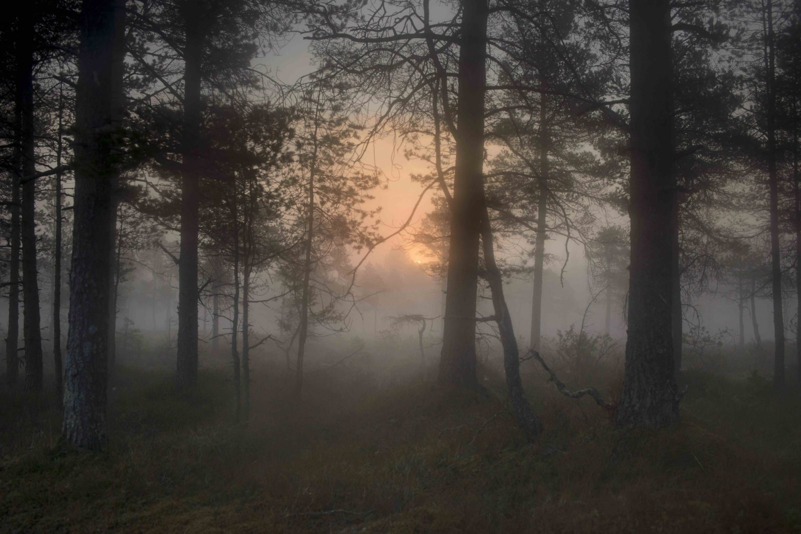 Todd-Hido-Untitled2c-Bright-Black-World2c-2017-Courtesy-Reflex-Gallery-Amsterdam