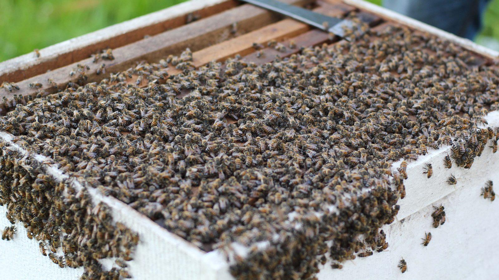 Honing Het Nieuwe Goud Van Suriname Oneworld