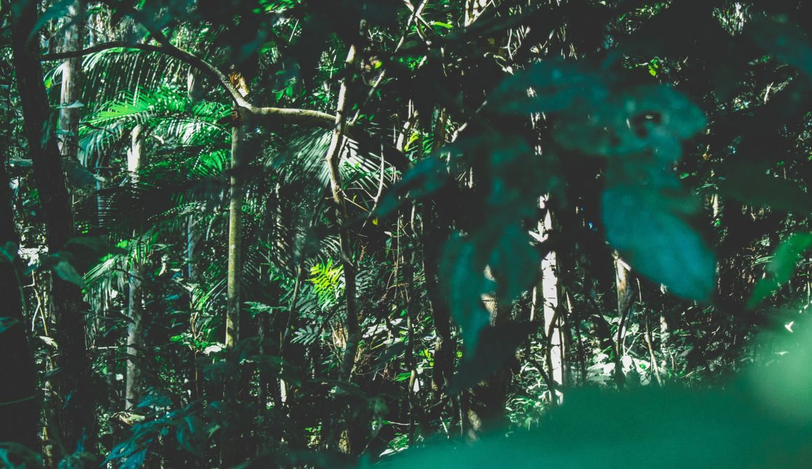 branches-brazil-environment-1225236A