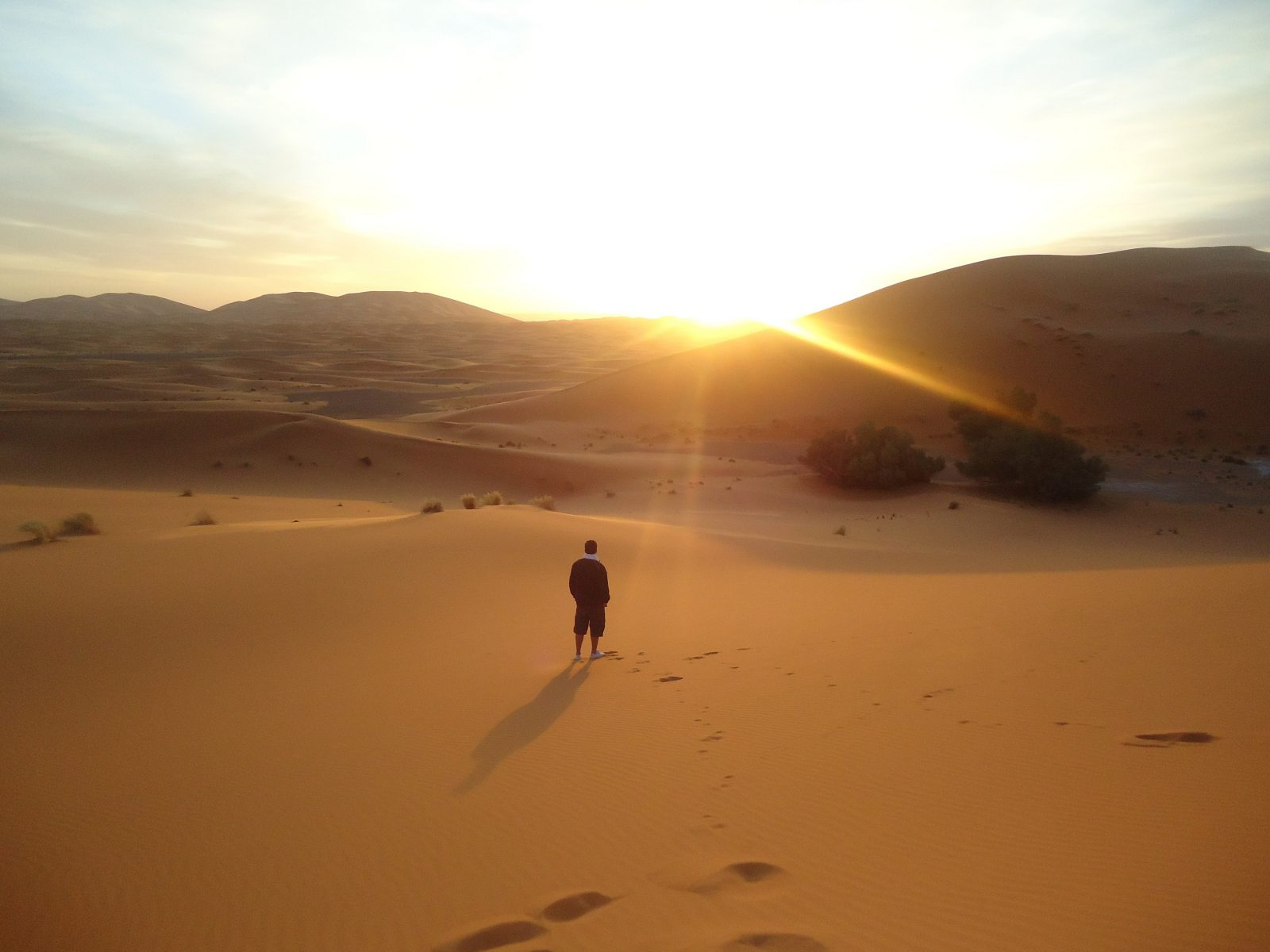 backlit-dawn-desert-774835