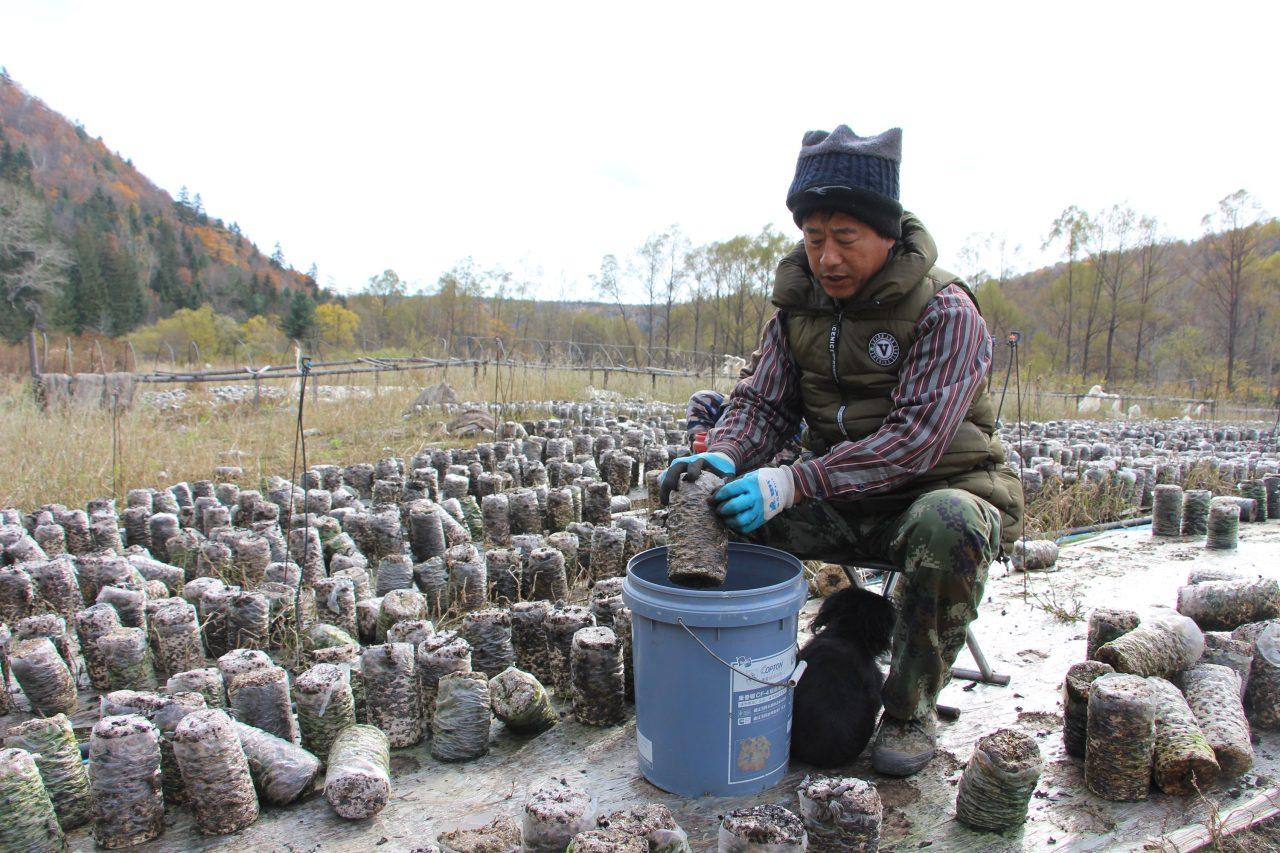 siberian tiger national park – Jia Chuishuang – champignonkweker, durft bergen niet meer in (3)