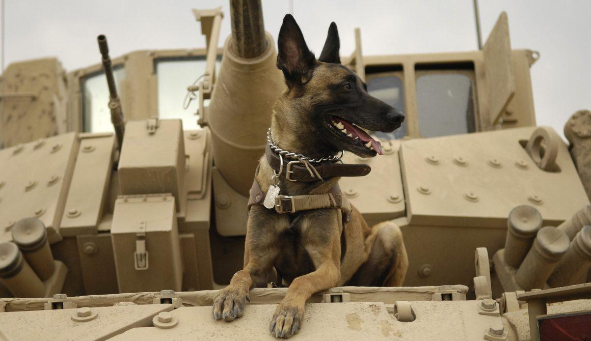 dog-1174482_1920