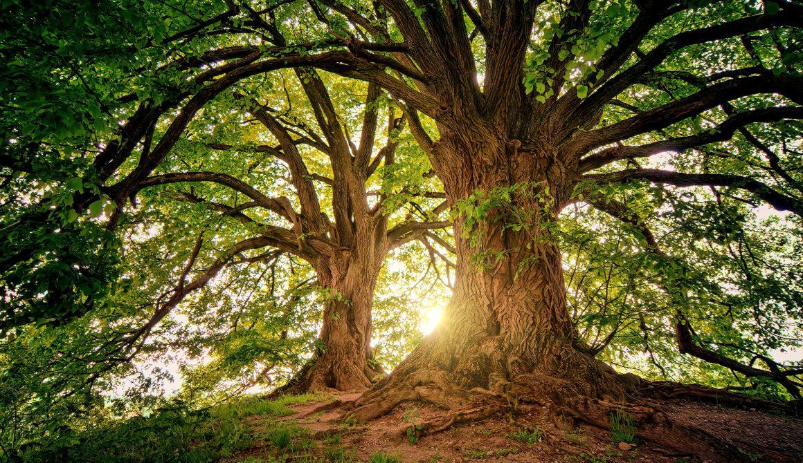 tree-3822149_1920 (1)