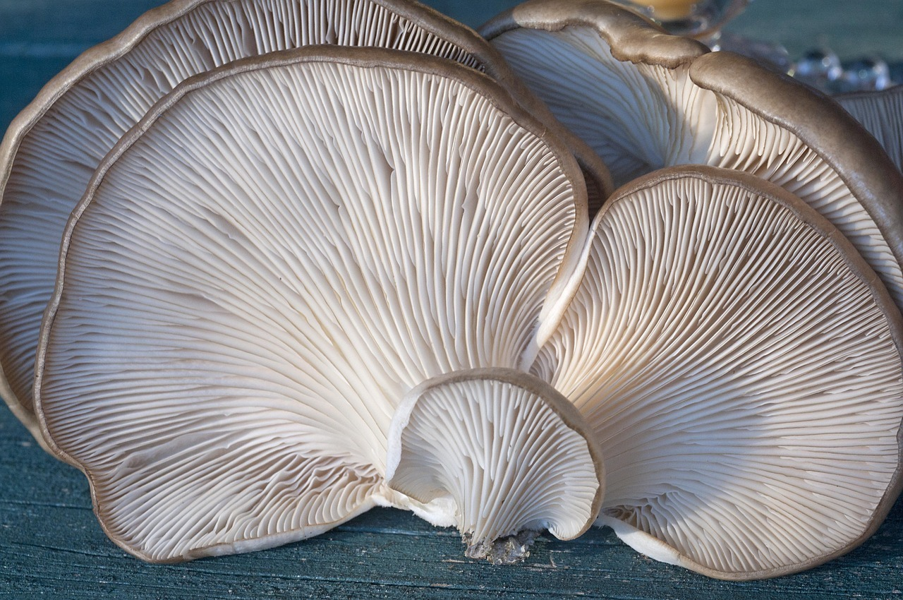 fungi-2069474_1280