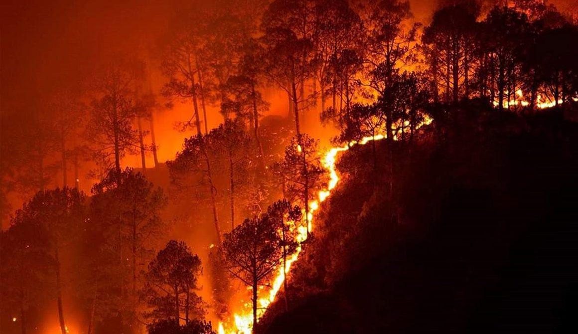 1280px-Bandipur_fires_2019